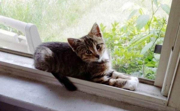 Бродячий котик зупинив молодого хлопця і попросив забрати його додому