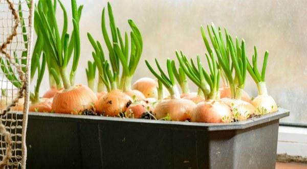 5 видів трав, які легко виростити на підвіконні