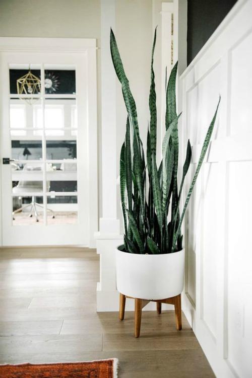 10 кімнатних рослин, які виростуть навіть в самому темному кутку