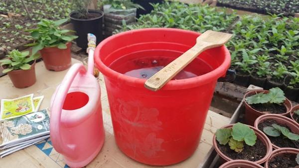 Три види підживлення для домашніх петуній. Буйне цвітіння гарантовано!